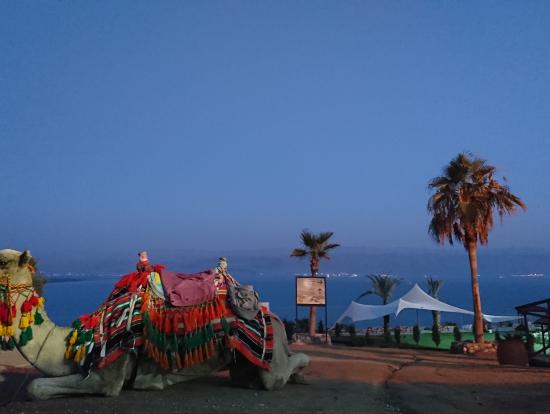 @死海  ラクダと一緒に夕日を見ました