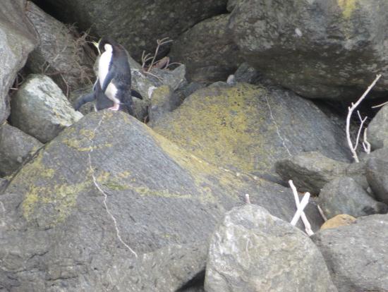 ペンギンがいました!
