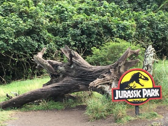 ジュラシックパークの小さい恐竜が隠れたところ