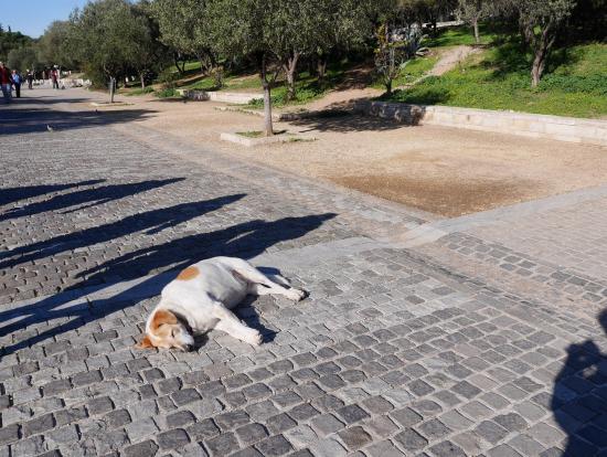 犬や猫が多かったが、総じてとてもフレンドリー。この犬はリラックスしすぎ