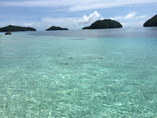 透明度抜群なパラオの海