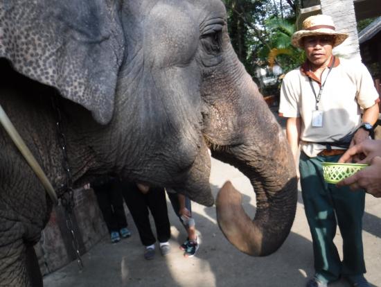 象に餌もやれます。