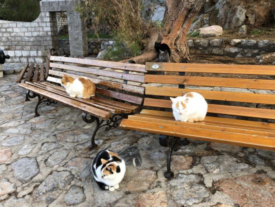 イドラ島の船着き場の猫たち