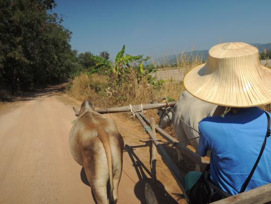 水牛で水源地帯をまわります。野鳥がたくさん飛んでいますが、牛車は揺れるので写真は撮れません(^^;;