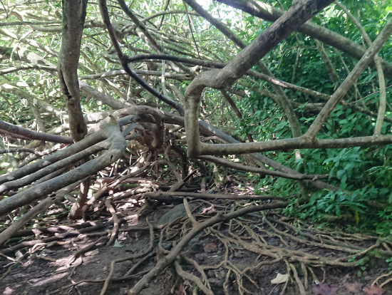 面白い樹木がたくさんあります
