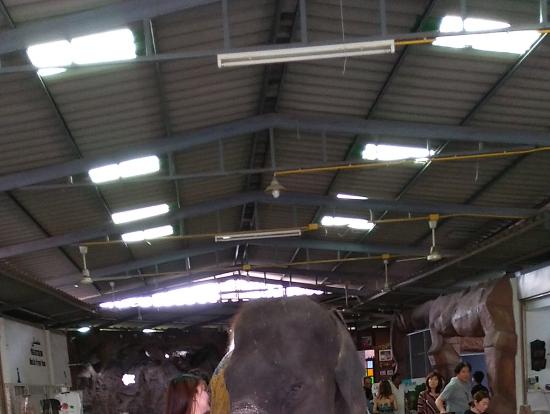 象さんに抱っこしてもらえるコーナー