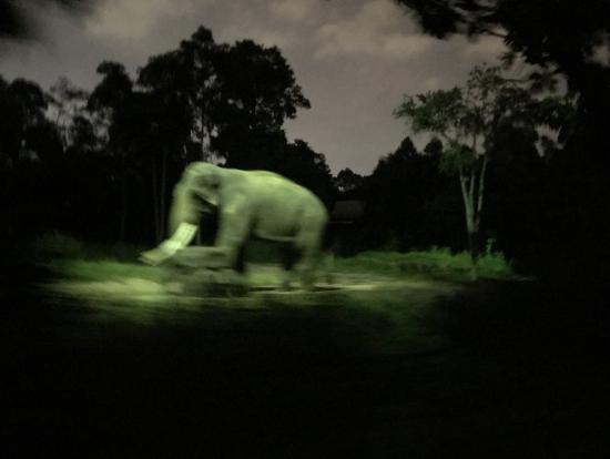 象さんです♡