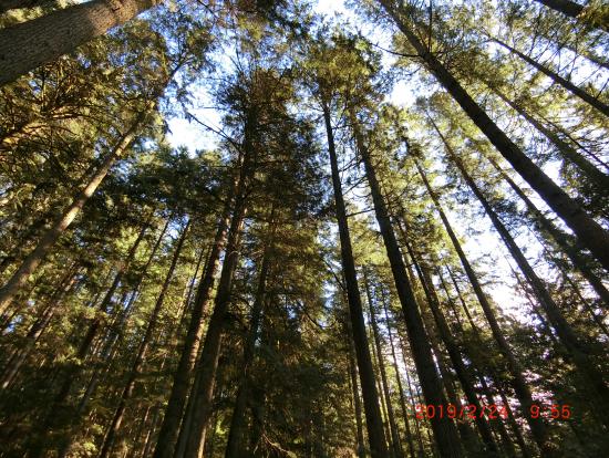 リン渓谷の森林浴
