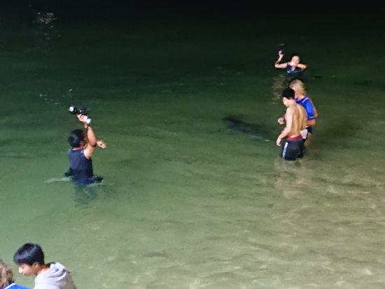 イルカの餌付けの風景