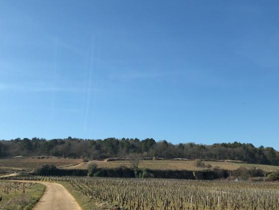 教会の鐘の音をBGMにブドウ畑を散策。