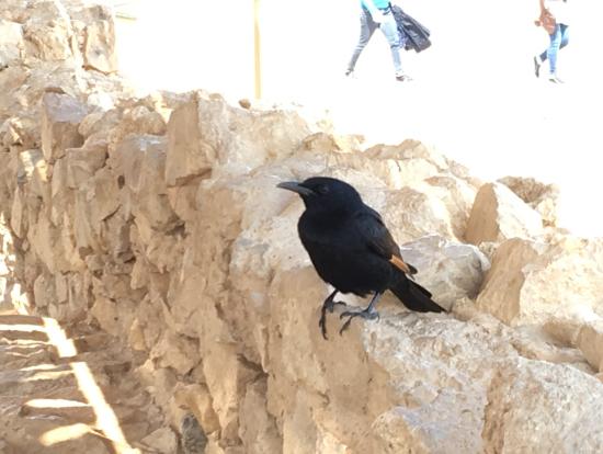 マサダの小鳥