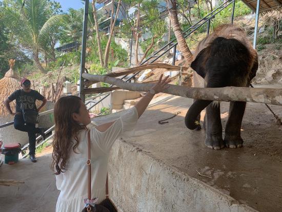 まずは象さんにバナナあげました