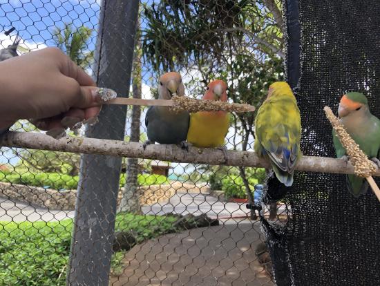 鳥がたくさんいるよ。