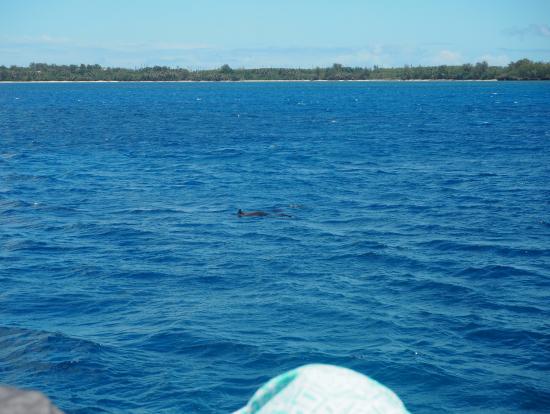 背びれを出して泳ぐイルカ