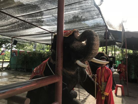 象も乗れる。値段もかなり安かった