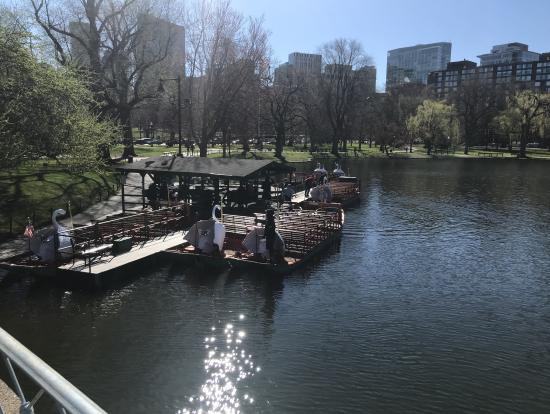 ボストニアンに人気のダック(スワン?)ボート