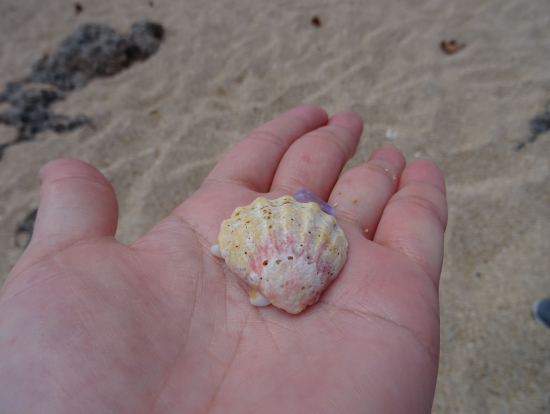 幸せの貝殻ゲット