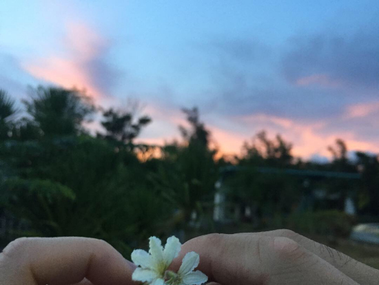 恋人岬で教えてくださった花