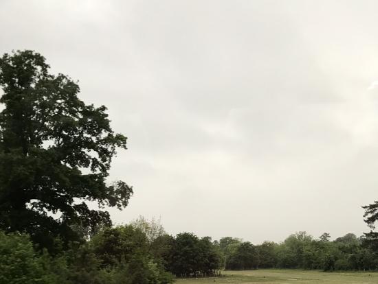 バスから見えるブローニュの森