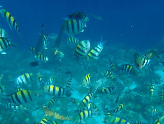 ヒルトゥガン島の魚たち