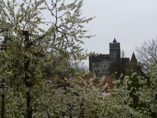 ブラン城近くは花盛り。
