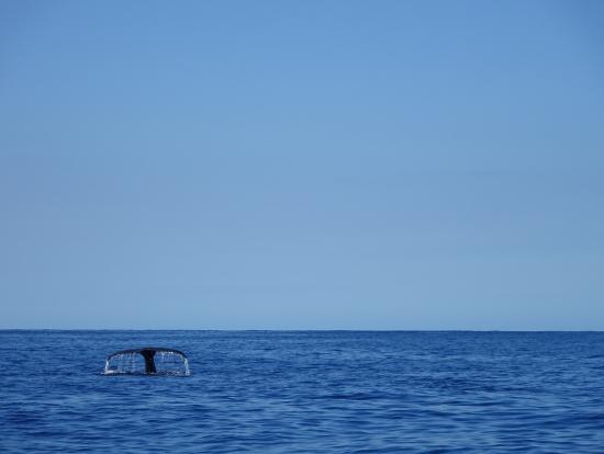 クジラも!