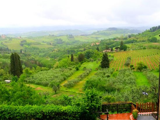 トスカーナらしいブドウ畑の風景
