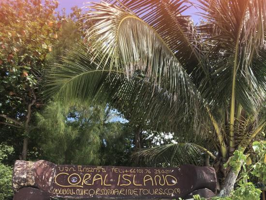 コーラル島ありがとう!
