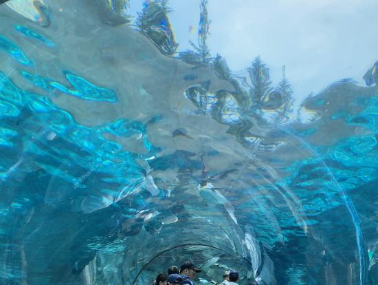 水中トンネルの両脇をみると、ペンギンが泳いでおり、泳ぐペンギンの姿を間近に見れます