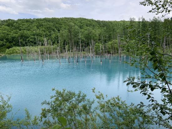 最近有名になった「青い池」。そもそも近くの川も青いので、元々そういう色なのでしょうけど、時期によって見え方が異なるみたいです。