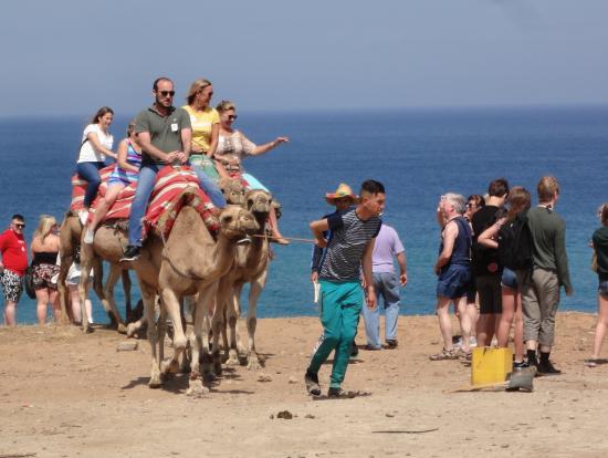 モロッコでのらくだ体験