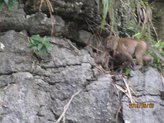 野生の猿がちらほら