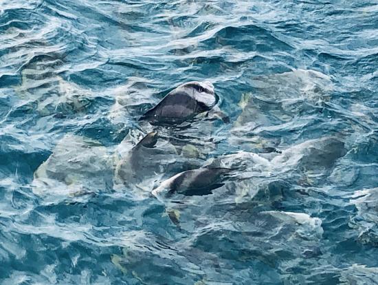 グリーン島出港前に餌付け 魚が群がります