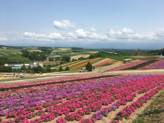 四季彩の丘 ピンクが映える!