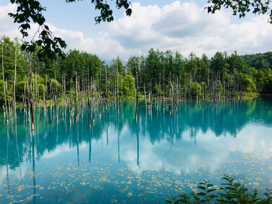 青い池!神秘的で綺麗!