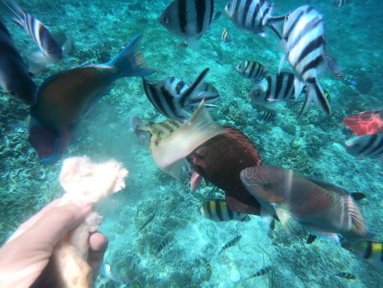 シュノーケルしながらパンを撒くと あっという間に沢山魚が集まってきます!凄いです!
