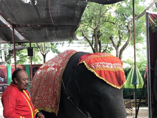 象さんはとても芸達者!40Bで自分のカメラで抱きついて写真撮れます☆