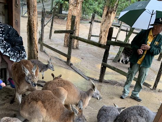 カンガルー達と一緒に雨宿りしたよ