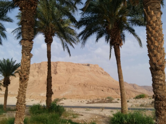 マサダと中東感あふれる木々