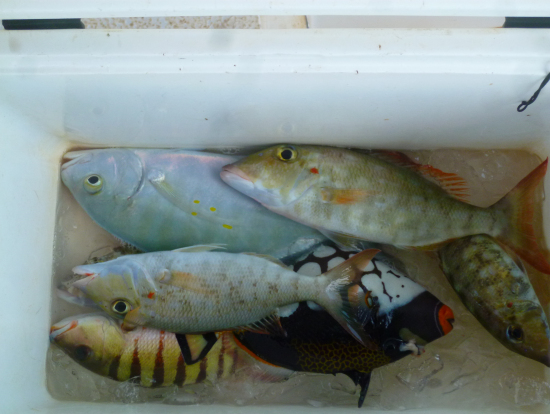 皆で釣った魚。