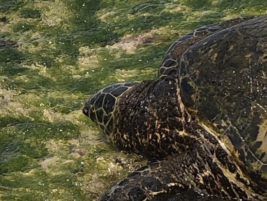 ウミガメを間近で見られて大興奮でした!