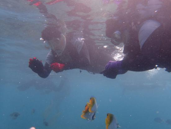 魚が顔の近くまで寄ってくるので感動します!