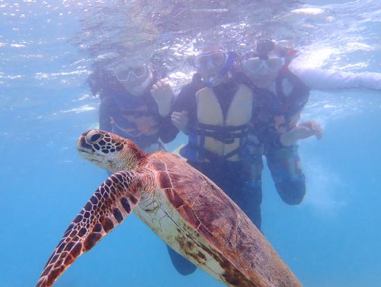 至近距離でウミガメと撮影。