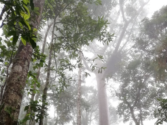 霧に包まれる熱帯雨林