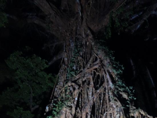 荘厳な聖堂の木は圧巻!
