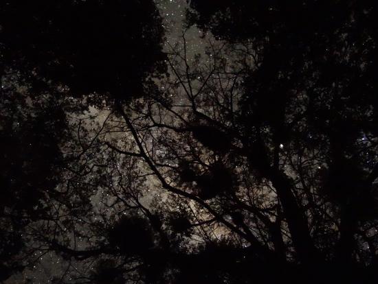 聖堂の木の上に輝く星空と天の川